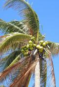 27th Dec 2019 - coconuts