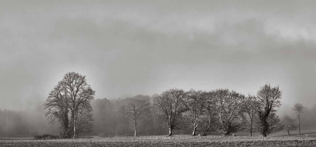 Misty Copse by vignouse