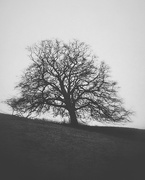 1st Jan 2020 - Waseley Tree