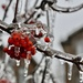 Ice Storm December 2019 by frantackaberry
