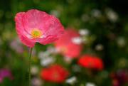 2nd Jan 2020 - Wildflower garden
