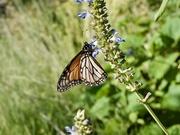 2nd Jan 2020 - Chasing Butterflies P1020102