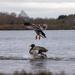 Leapfrog duck style by stevejacob
