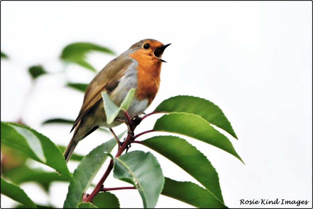 Same bird different day by rosiekind