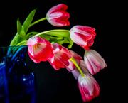 2nd Jan 2020 - bending tulips