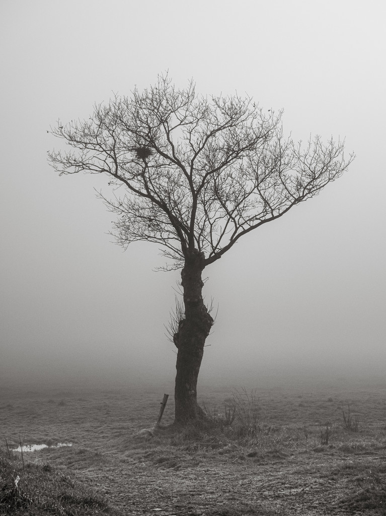 Lone Tree... by vignouse