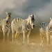 Zebras  by ludwigsdiana
