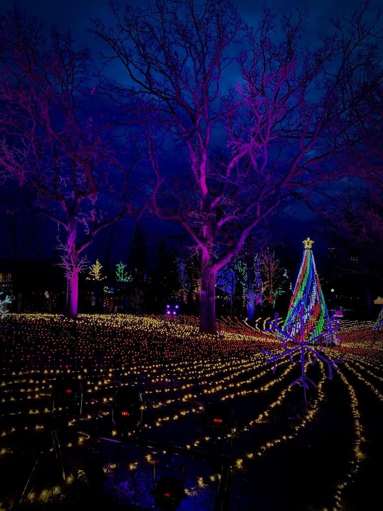 Field of Trees by jyokota