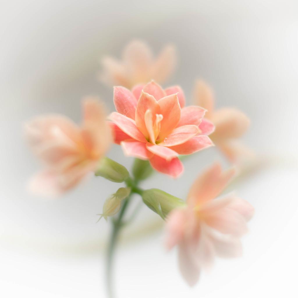 A tiny flower by haskar