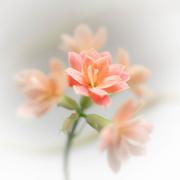 1st Jan 2020 - A tiny flower