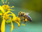 3rd Jan 2020 - Full of pollens