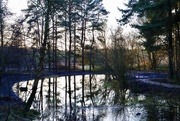 3rd Jan 2020 - Winter Reflections