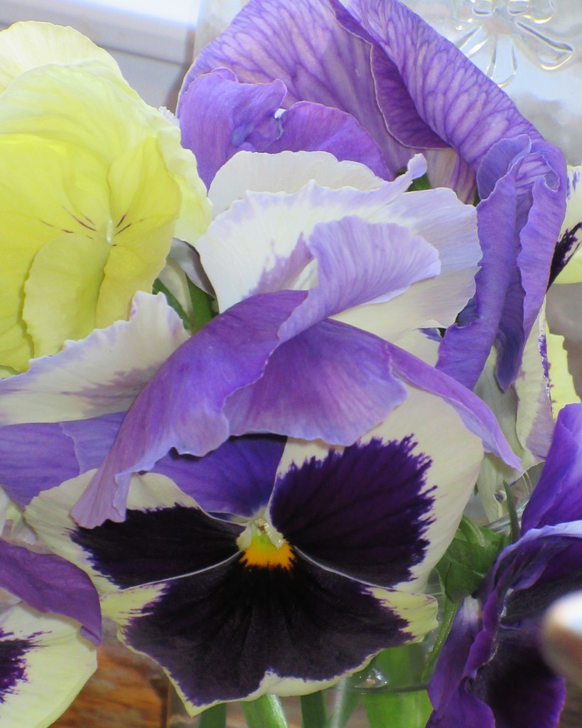 December 12: More Pansies by daisymiller