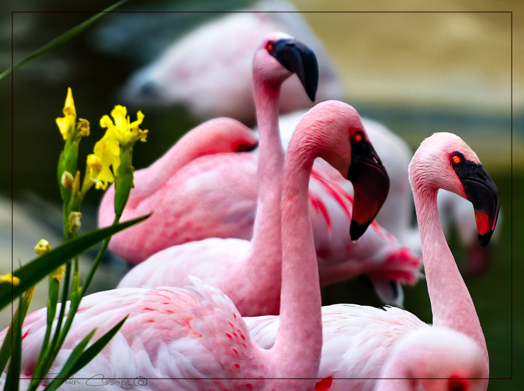 Flamingo Friday '20 01 by stray_shooter