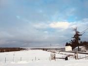 3rd Jan 2020 - Winter