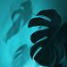 Leaf and shadow  by fr1da