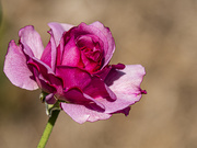 3rd Jan 2020 - bloomin marvellous