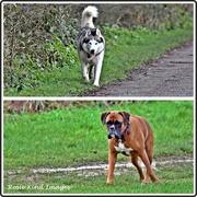 4th Jan 2020 - Lovely dogs