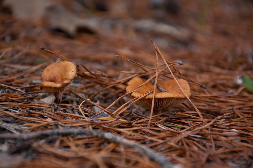 """Fungus among us""... by thewatersphotos"