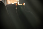 4th Jan 2020 - Invisible Cat