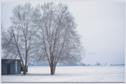4th Jan 2020 - While Winter Makes Me Wait