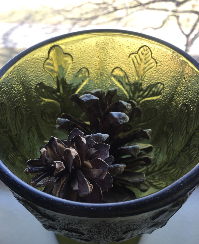 Composition with pine cones and glass by mcsiegle