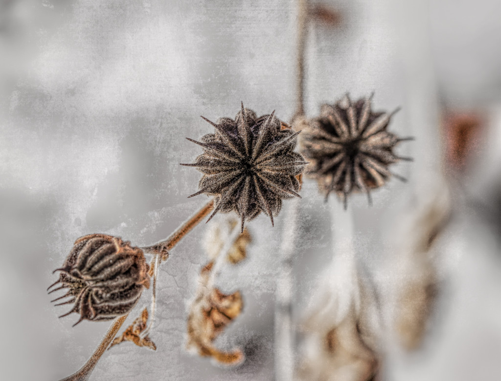 winter seeds by aecasey