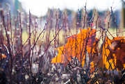 5th Jan 2020 - Autumn in the Winter
