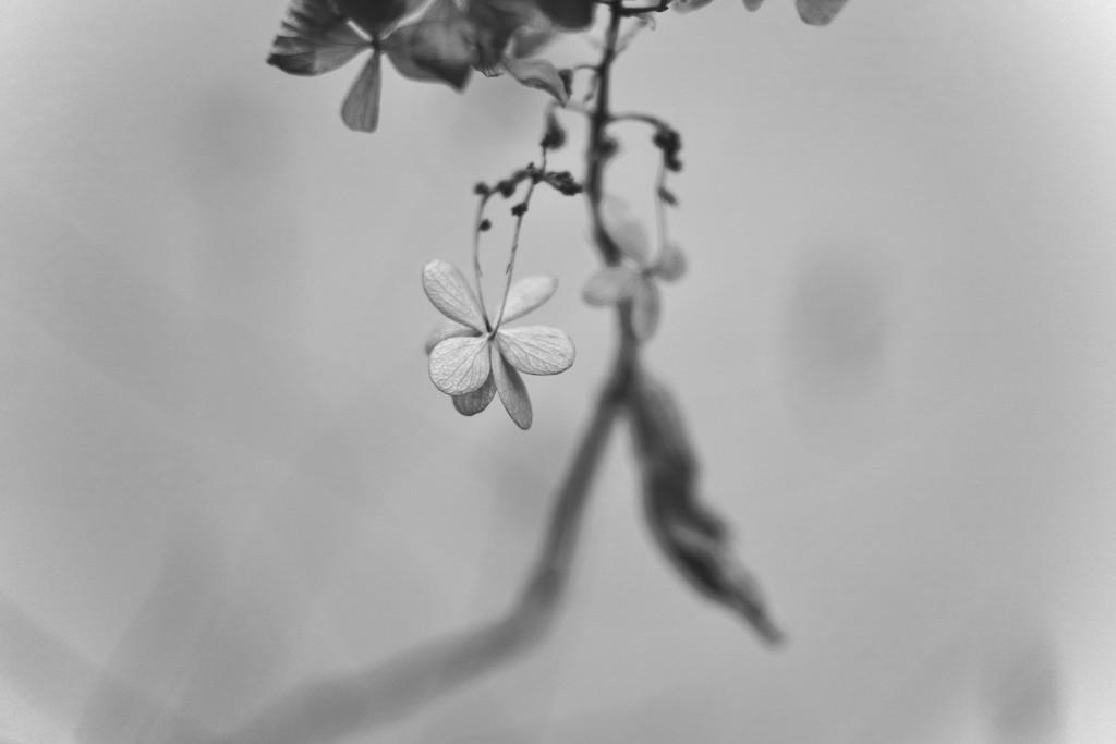 Garden in Winter - b&w by toinette