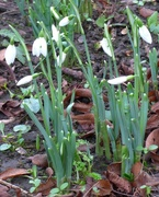 5th Jan 2020 - An Early Sign of Spring