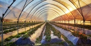 5th Jan 2020 - Greenhouse