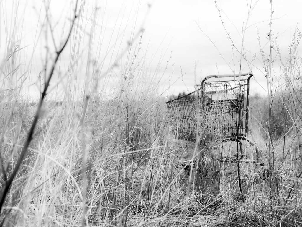 shopping cart by northy