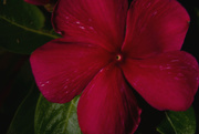 5th Jan 2020 - Light Painted Flower!