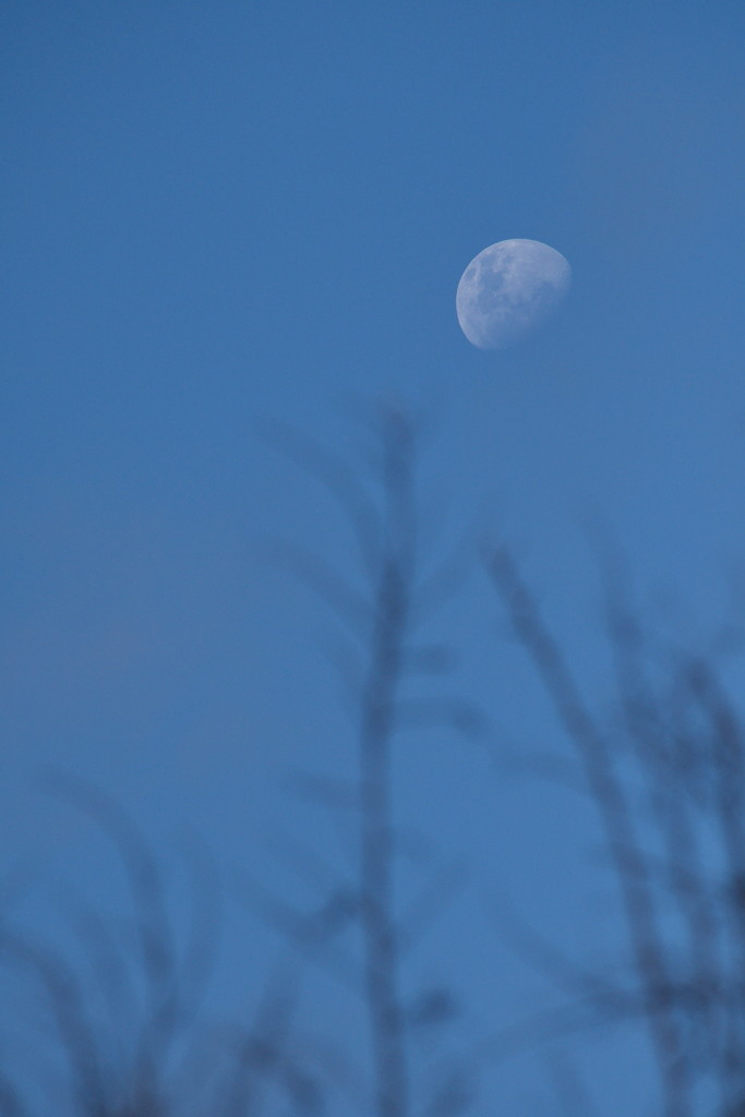 Tonights Moon - 7.04pm by kgolab