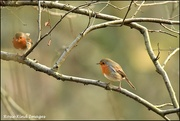 6th Jan 2020 - Mr and Mrs Robin
