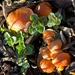 Fungi by shutterbug49