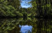 6th Jan 2020 - Flashback to South Carolina Swamp