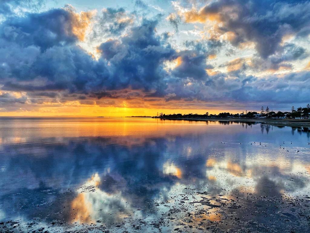 A new dawn by corymbia