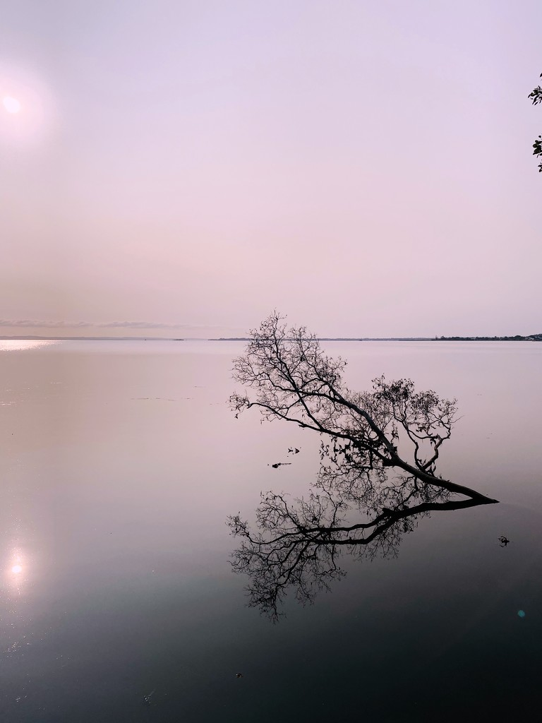 Calm morning by corymbia