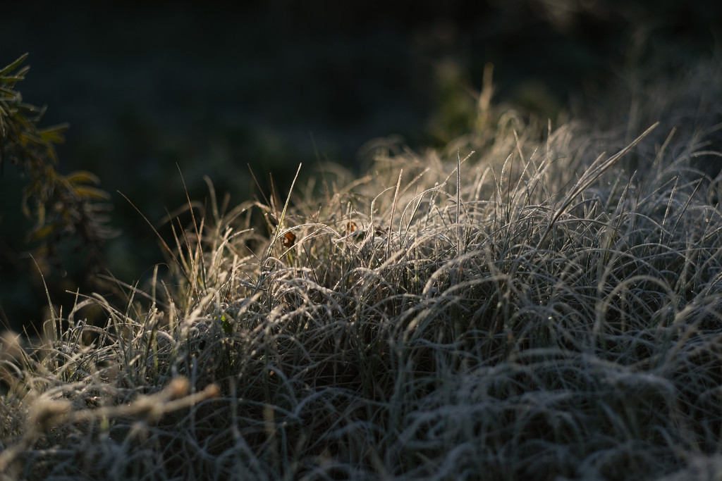 Morning frost by angelikavr