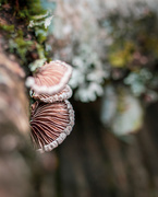 7th Jan 2020 - Nature's Jewelry
