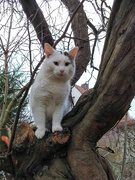 7th Jan 2020 - Joshi in the quince tree