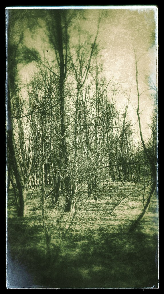 Spectral woods by spectrum