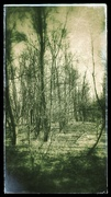 7th Jan 2020 - Spectral woods