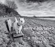 8th Jan 2020 - Birthday Boy!!