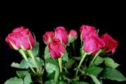7th Jan 2020 - Carole's Roses