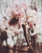 8th Jan 2020 - Blossom
