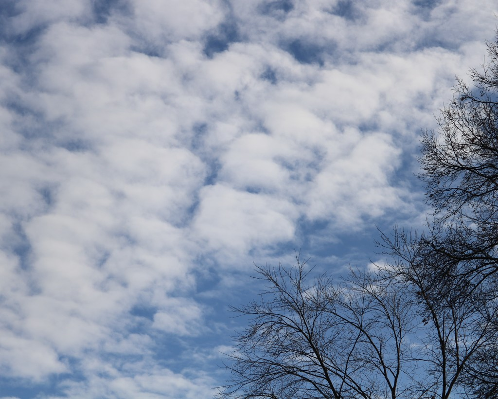 January 8: Clouds by daisymiller