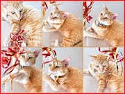 9th Jan 2020 - Minky loved Christmas