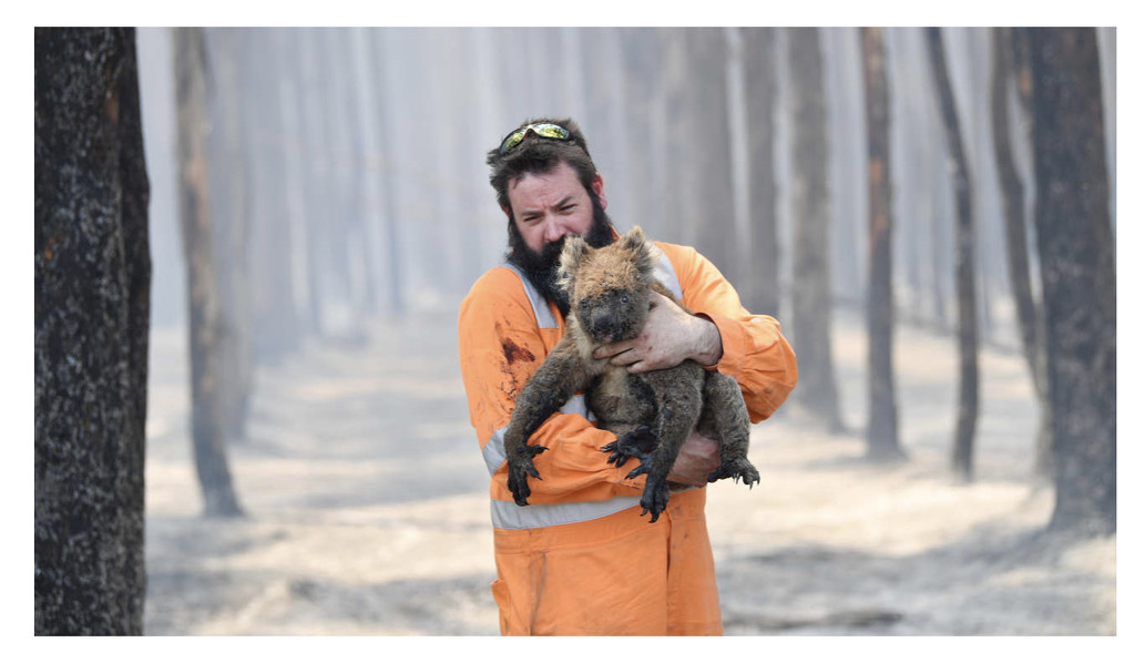 Our bushfire disaster casualties by golftragic